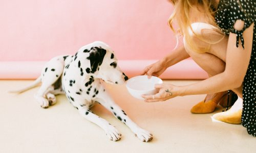 Tips on How to Store Your Dog's Food Properly